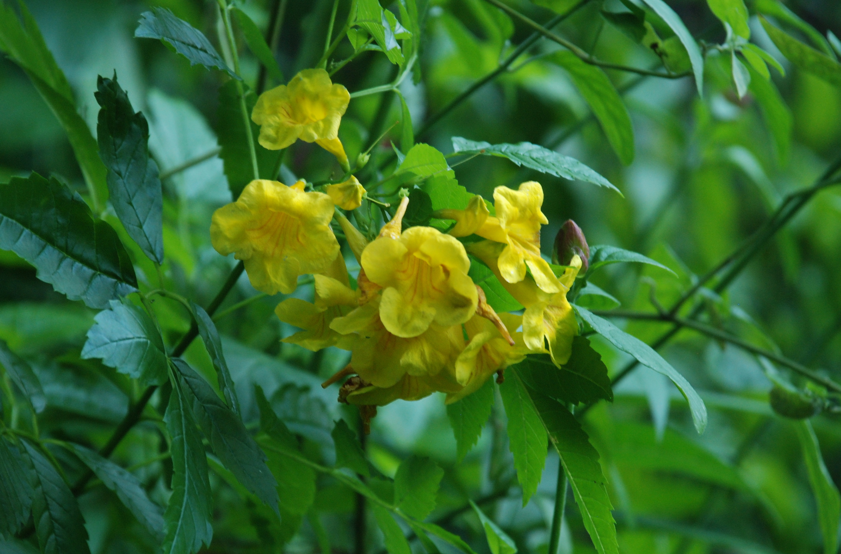 Yellow Bells Automatic Gardening Real Gluten Free Food